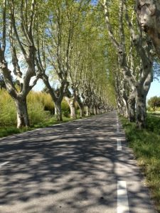11. Cavaillon to St. Remy road...of Van Gogh fame.