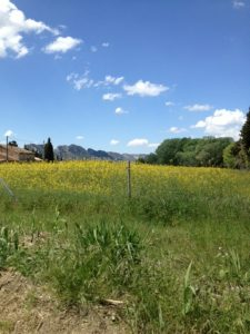24. View of the Alpilles.
