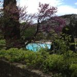 2. Plenty of private pools shaded with the gorgeous arbre de judée , a tree so pink in May.