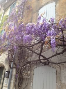 4. Plenty of fragrant wisteria on facades and terraces.