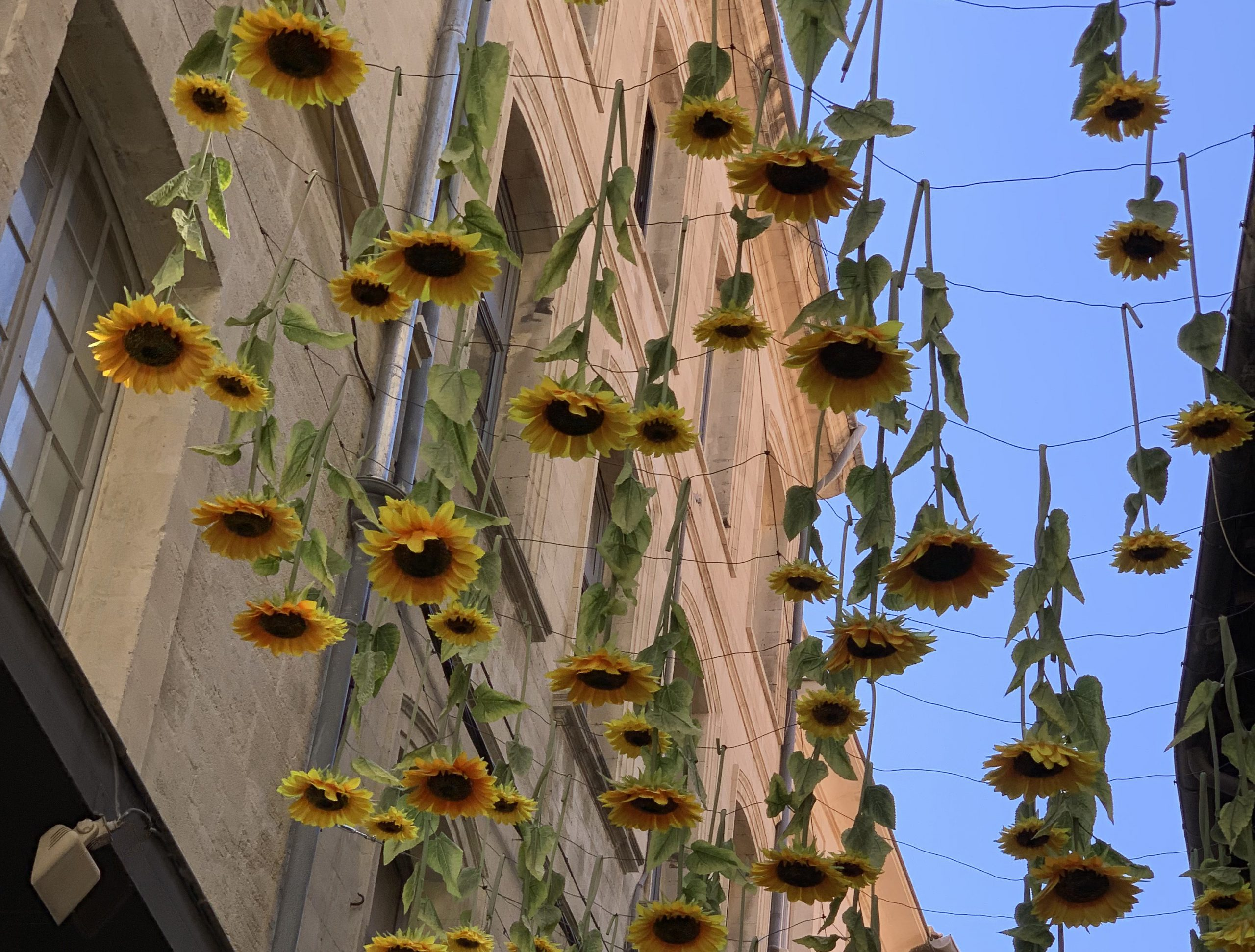 Avignon Sunflowers